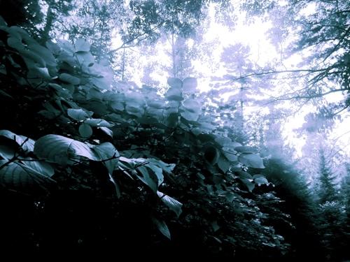 Eistemane Ridge by The Aesthetitrician
