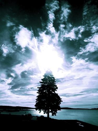 Christening Tree