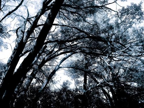 Light Darted XIV ~ Bowern