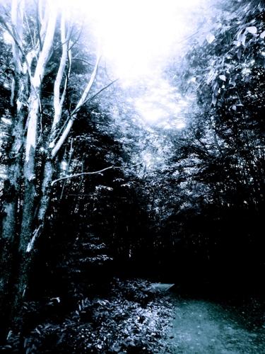 XXXI ~ Dark Paths
