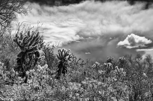 Desert Plants and Approaching Storm
