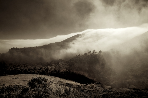 Marine Fog, Marin County
