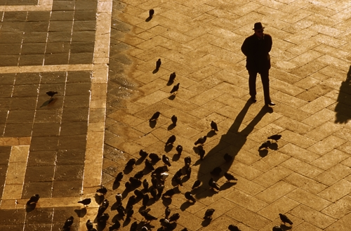 Man & Pigeons in San Marco