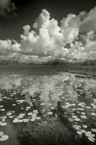 Everglades #1