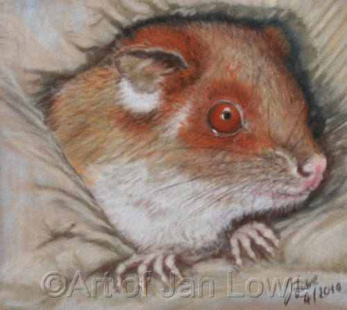 Baby Ringtail Possum by Jan Lowe's Passion of Animals & Realism