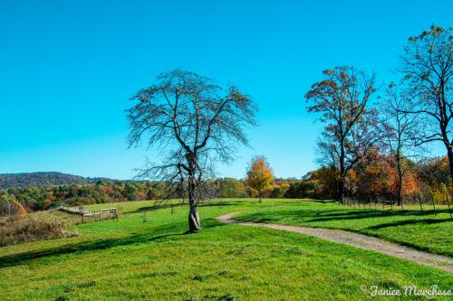 Appalachian Trail Pasture