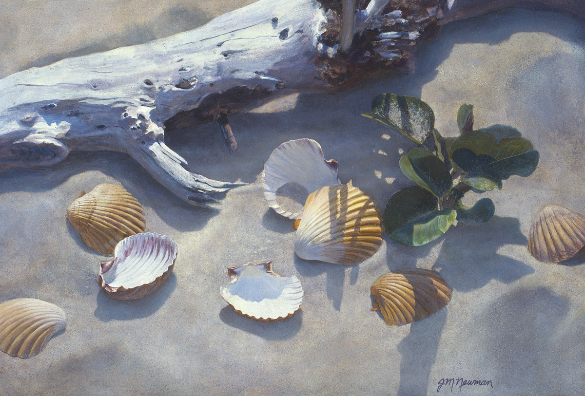 Painting Quot Shells And Driftwood In The Sand Quot Original