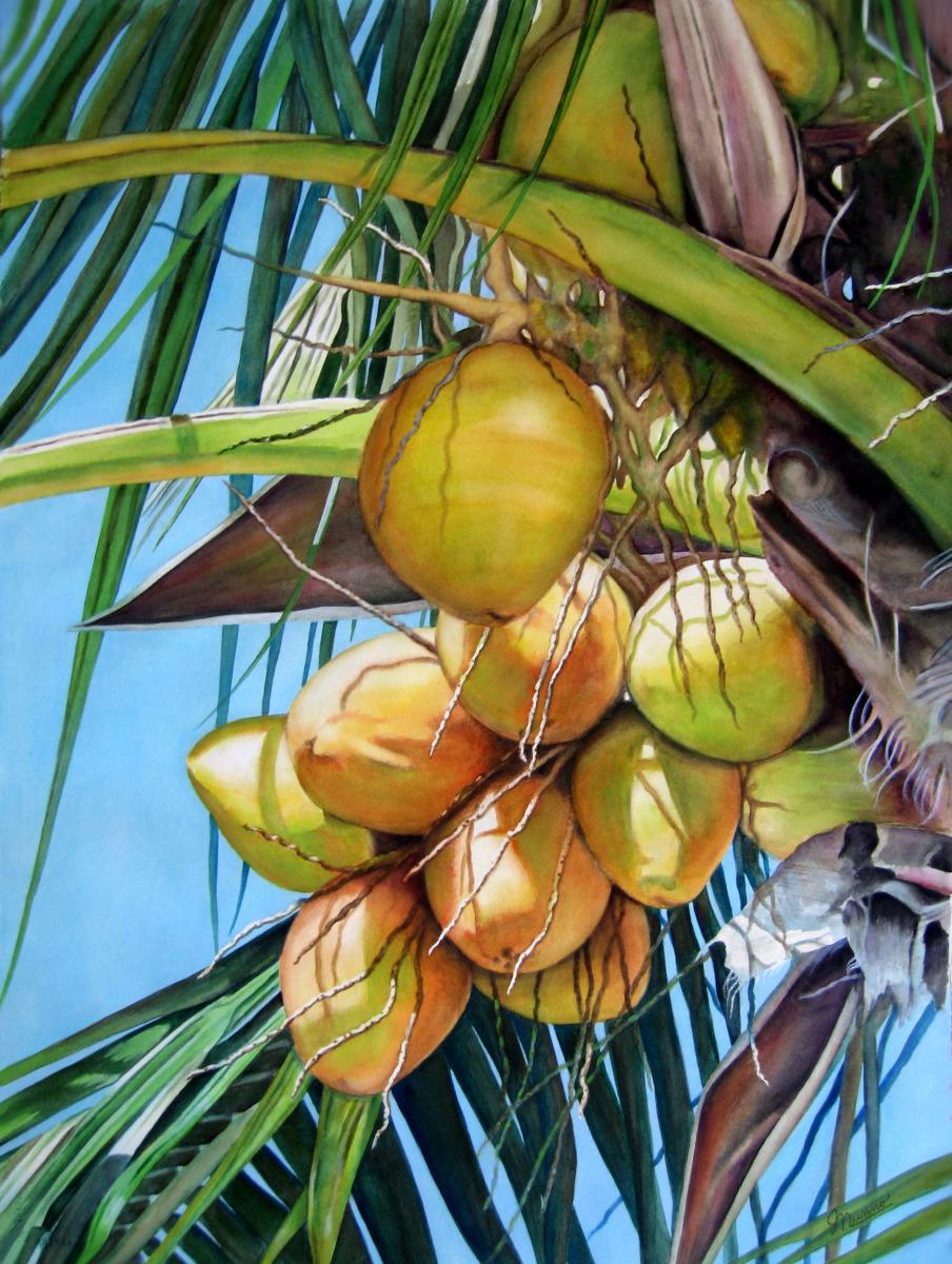 Judy Nunno, sanibel coconuts (large view)