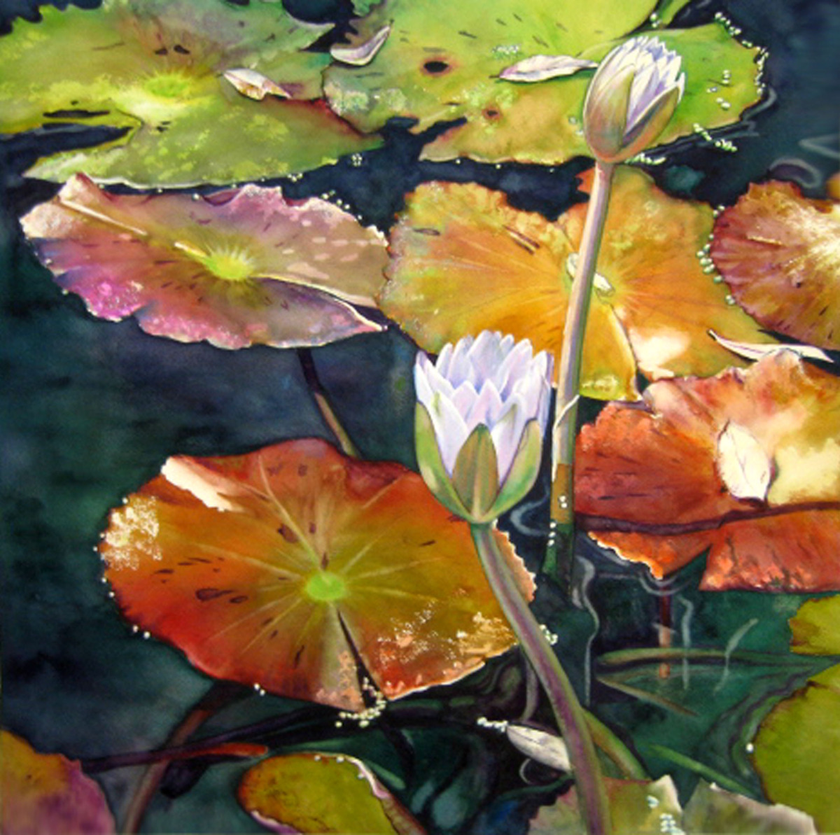 Lily Pads (large view)