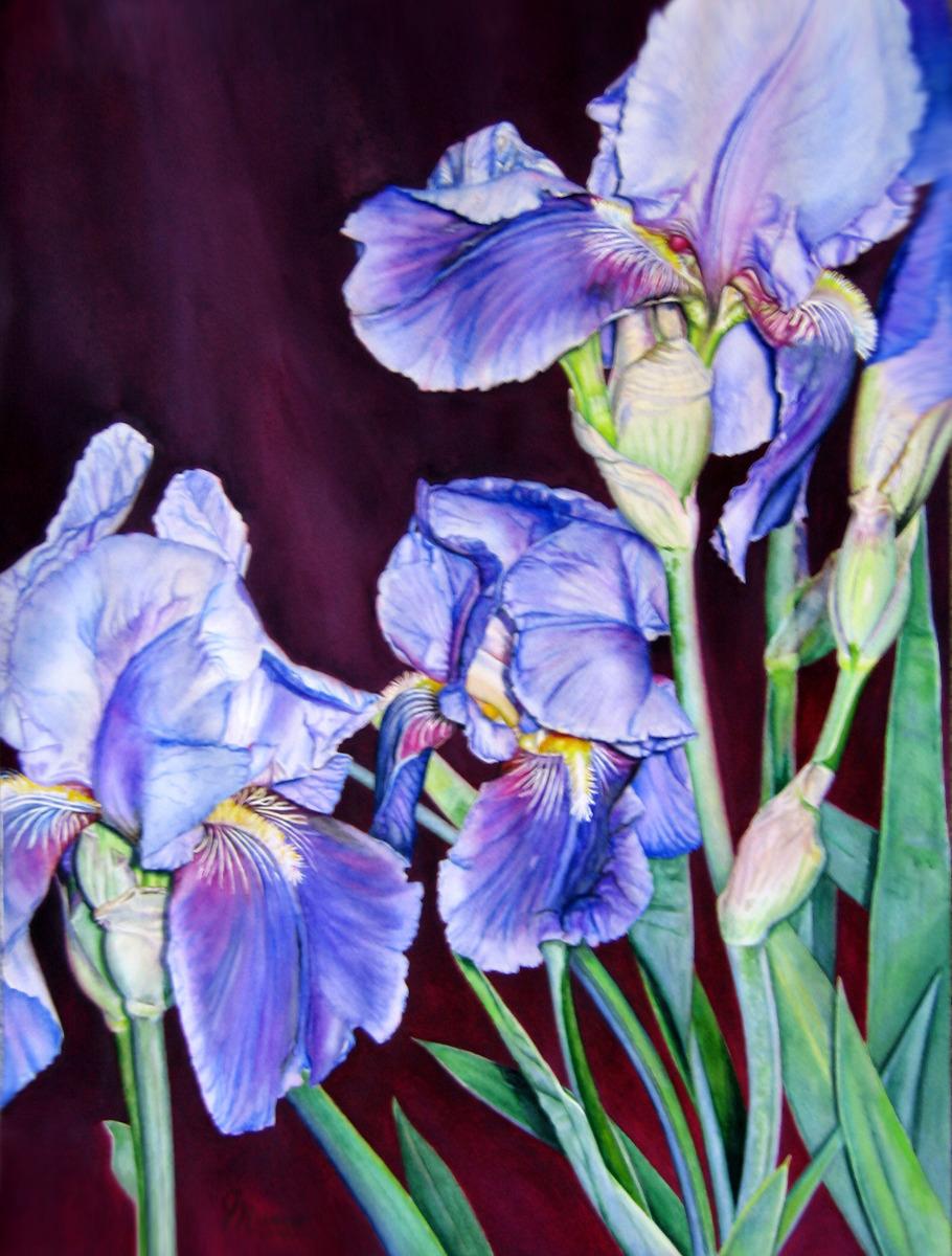Judy Nunno, iris, iris, iris (large view)