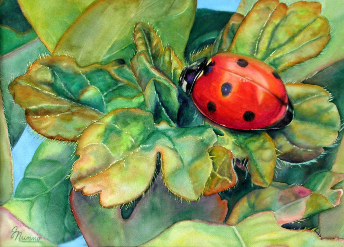 Judy Nunno, ladybug (large view)