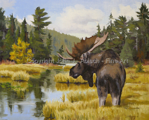 Northern Bull Moose