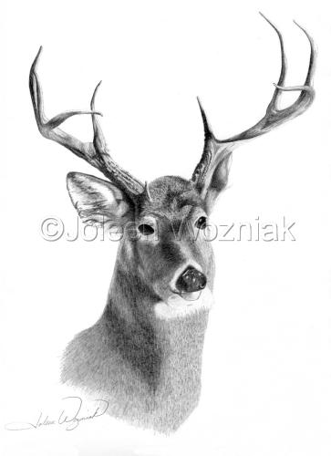 """""""Buck"""" by Joleen Wozniak"""