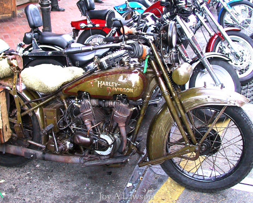 Antique Hog