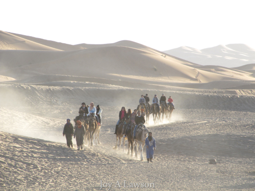 Morning Caravan in the Sahara Desert, Morocco