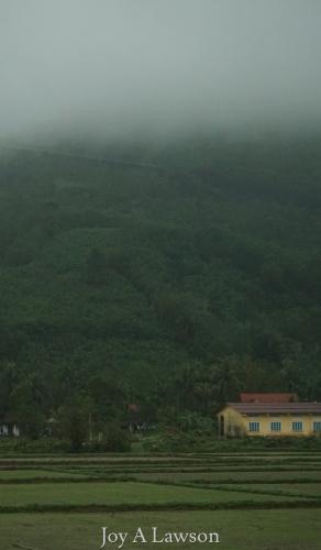 Vietnam Mist