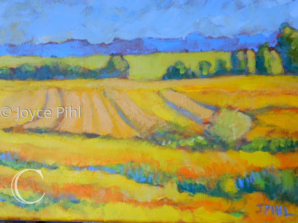 Fields of Yellow (large view)
