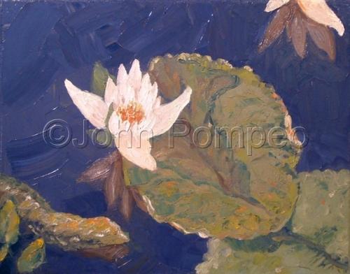 Lily by John Pompeo