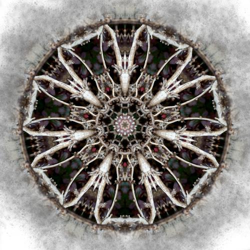 Winterfell Mandala by Janus Rose