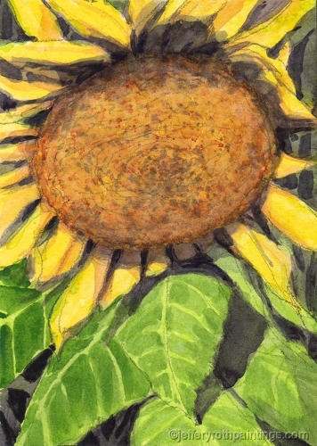 sunflower _01