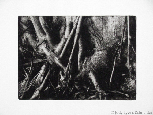 Roots by Judy Lyons Schneider
