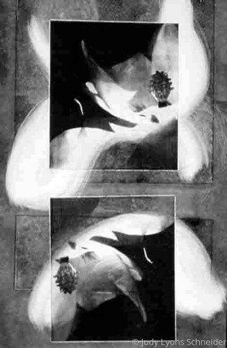 Moon Flower II