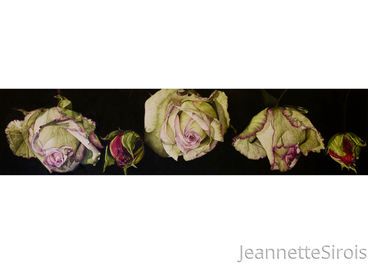 Stillness of Life:  Portrait of Rose (large view)
