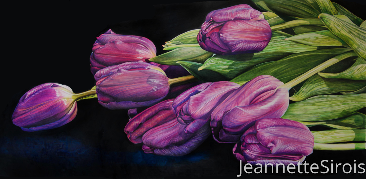 THE STILLNESS OF LIFE:  portrait of tulip (large view)
