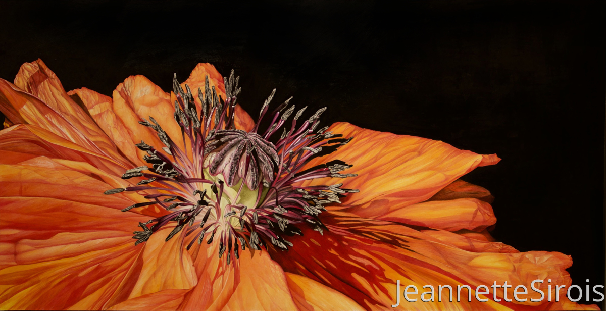 jeannette-sirois-color-pencil-drawing-poppy (large view)