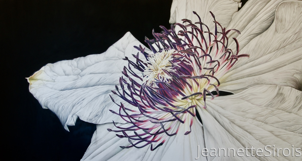 jeannette-sirois-color-pencil-drawing-clematis (large view)
