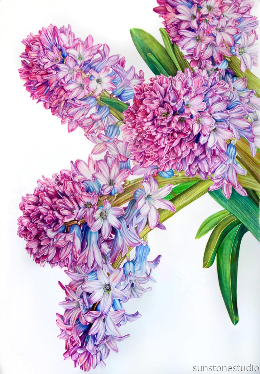 Hyacinth (large view)