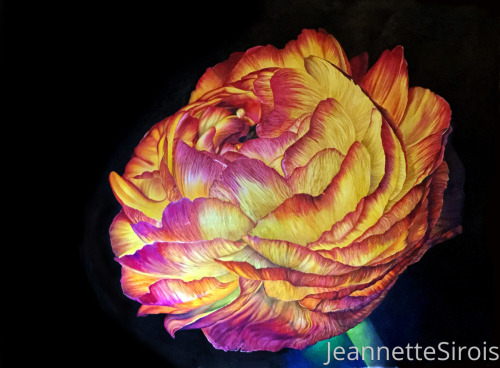 The Stillness of Life: portrait of ranuculus