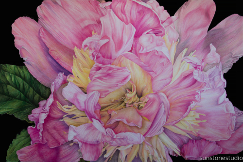 Stillness of Life:  Portrait of Peony