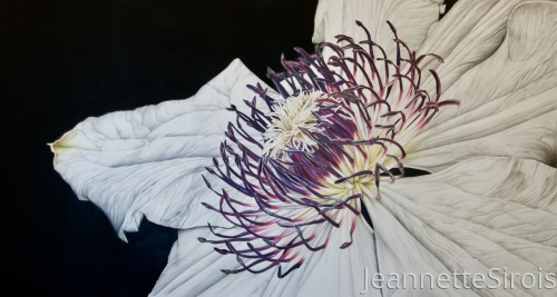 jeannette-sirois-color-pencil-drawing-clematis