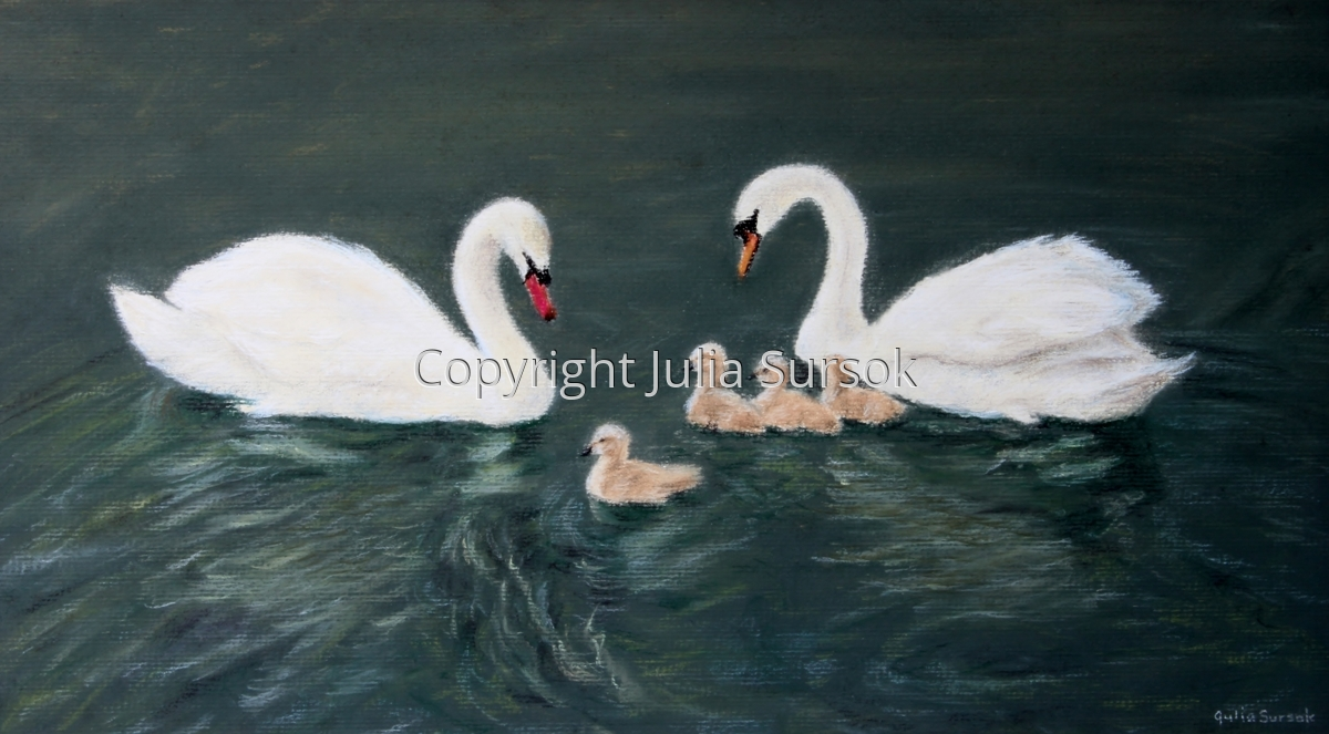 Swan's Pride (large view)