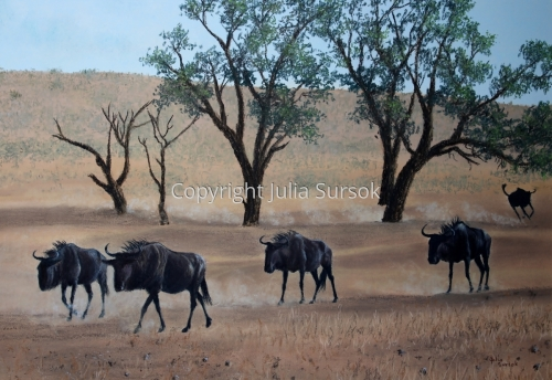Wildebeest Walk by Julia Sursok