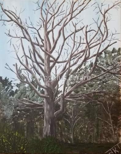 Peggy's Tree