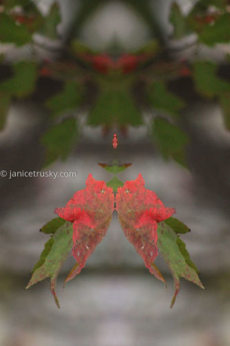 Oct Red Leaf 1