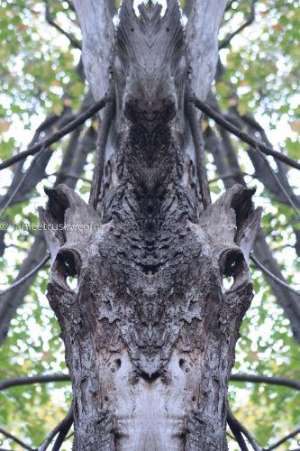 Oct. Tree 1