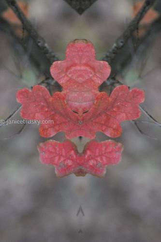 Oct. Red Leaf 3