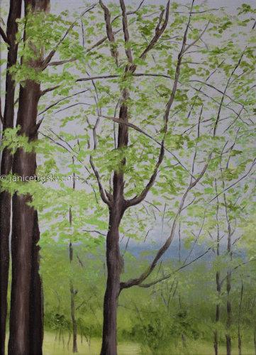 Forest Study V