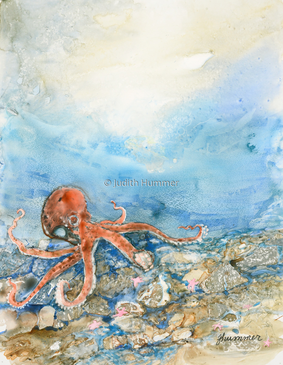 Octopus (large view)
