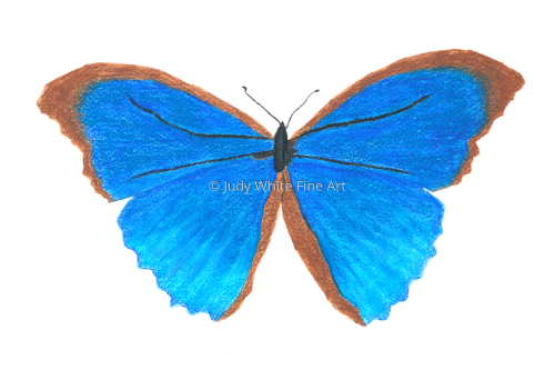 Le papillon bleu by Judy White Fine Art