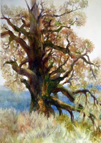 Fenceline Oak