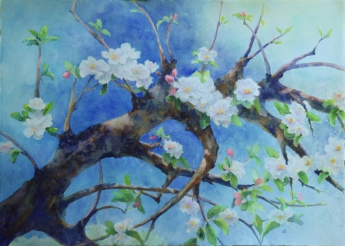 Blossoming Apple Branch by Judy Evenson