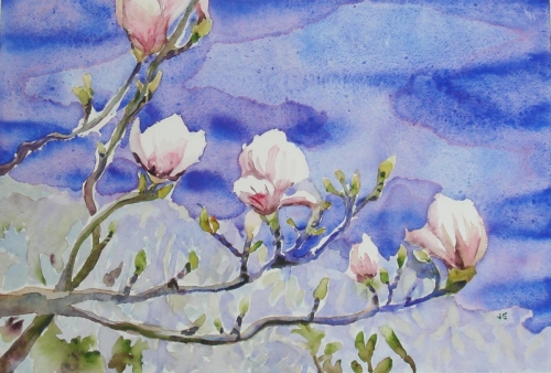 Early Magnolia Blossoms