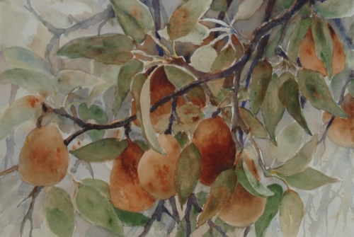 Pear Branch V by Judy Evenson