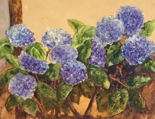 Hydrangeas Again ! by Judy Evenson
