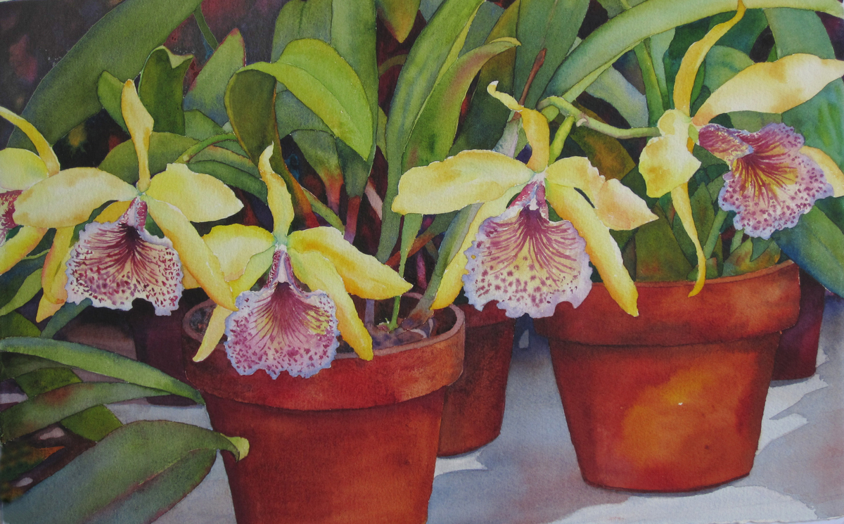 Potted Orchids (large view)