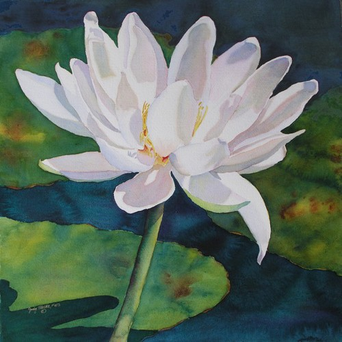 White Waterlily (large view)